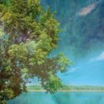 small_TreeofLife